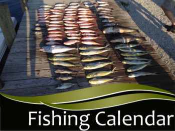 Fishing Species Calendar